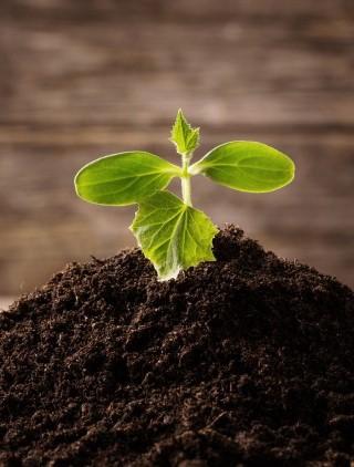 Asociatia compostului